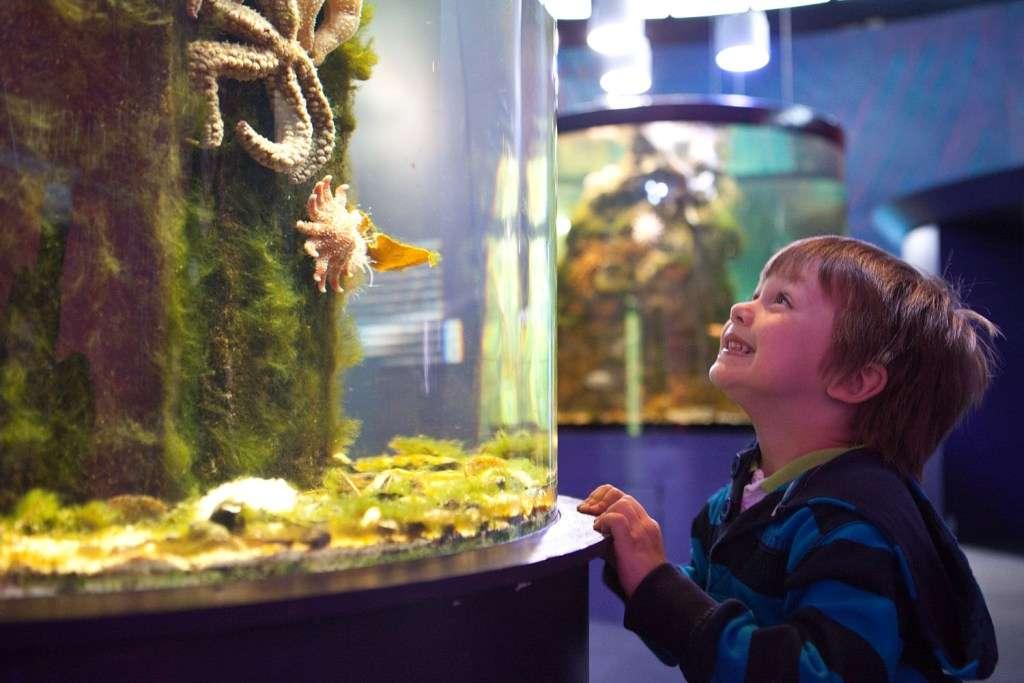 Child looking at fish tank in Riverwatch Aquarium