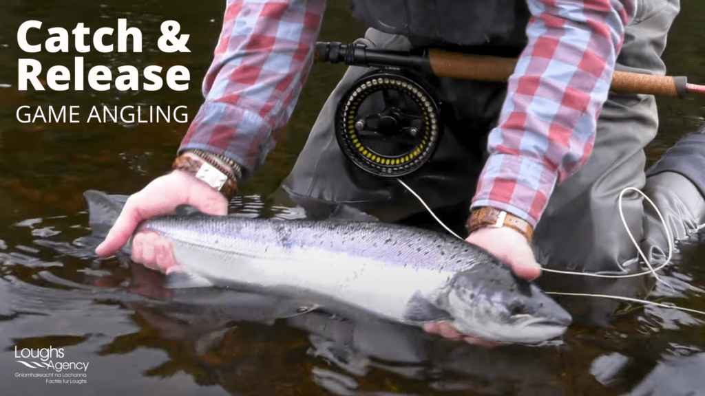 Catch and Release when game angling - video link