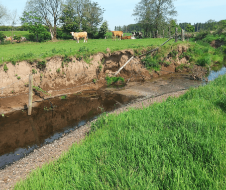 Aghlisk River showing bank erosion and cattle in field