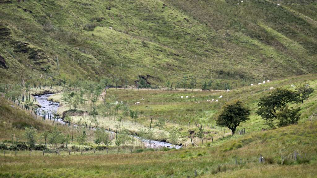 Upper reaches of the River Roe with native tree planting scheme